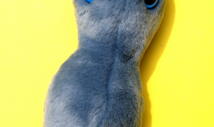 A photo of a stuffed toy representing a Gonnorhea. It is a blue-grey peanut shape, and has two big blue eyes.
