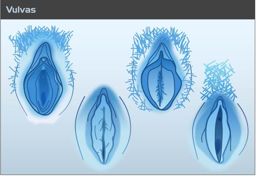 A diagram showing how vulvas all look different.